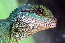 Talleres del Parque Infantil: lagarto que alarga la lengua