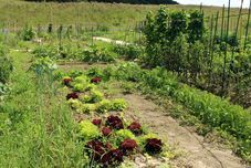 Curso básico en horticultura ecológica