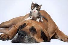 Convivencia con animales domésticos